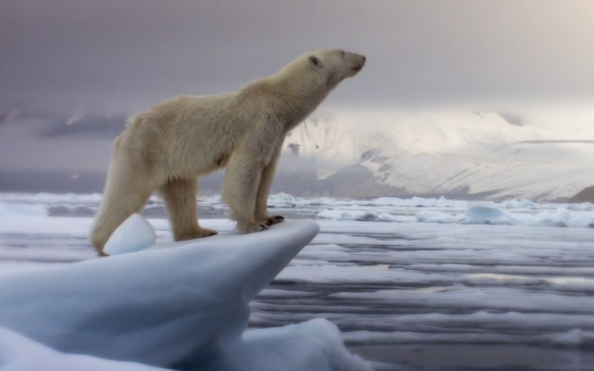 北极熊感叹这年头做熊好难
